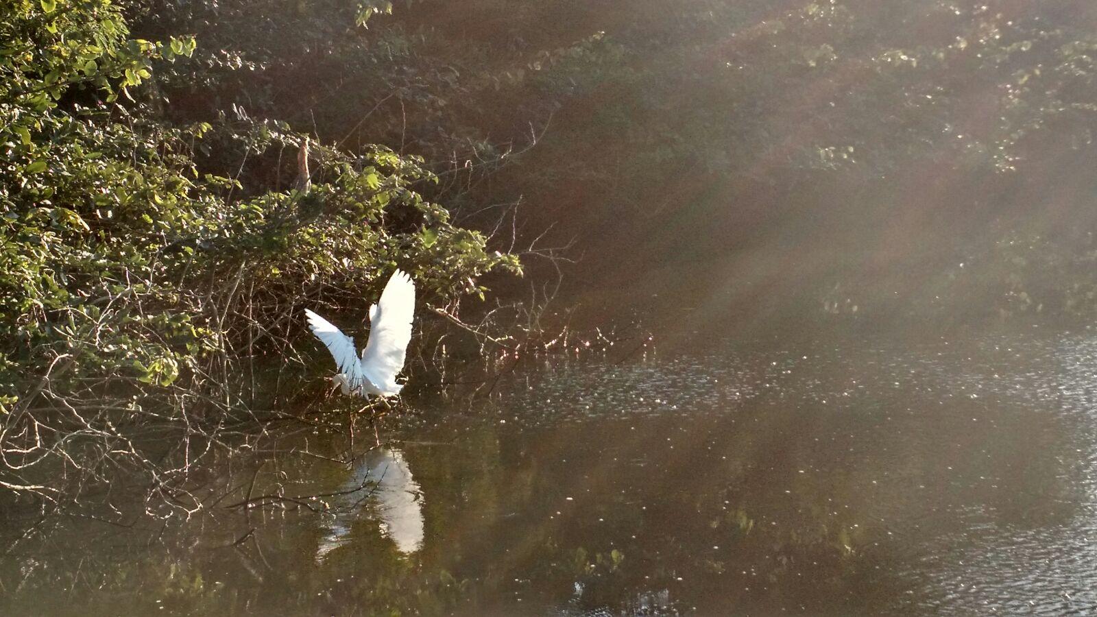 Manhã de sol na lagoa
